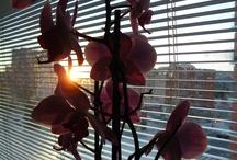 Flores que amo / by Karina Sanchez