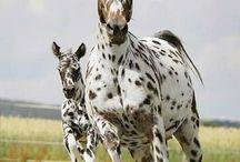 Horses / by Kelsey Marie