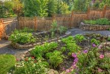 Gardening / by Janette Douglas