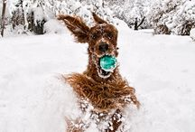 Snow Fun / by Tami DeVore