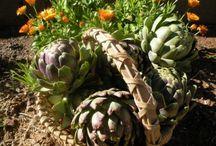 AZ Edible Gardening / Organic edible gardening in Arizona and other desert areas.  / by Jan Olsen