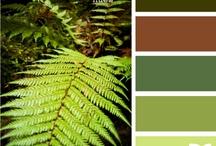 moss, ferns & terrariums  / by Sadie Metter