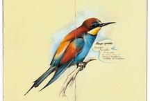 birds / by April Renee Burge