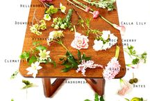 Flora / by ABODEdesignstudio