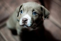 cuteness <3  / by Tara Abrams