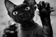 pets / by Desirae Watson