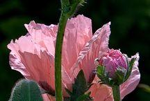 Flowers! / by Joyce Lavene