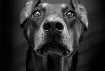 Best friend / by Lynda Hurd