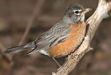 Birds / by John Graney