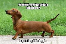 Dachshunds / We are owned by our 2 awesome dachshunds!!!! ;) I love EVERYTHING doxie! :) / by Jackie K