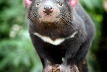 Marsupial Species / by Rachel Warren