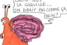 Funny Brain / by Signos