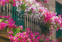 Creative Balcony Ideas / by Barb Pullin