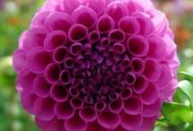 garden: patios, walkways and pretty flowers / someday I will have a yard again / by Tracey Gossman-Gaskins