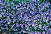 Mum's Blue Silver Green Border / by Annie Selke