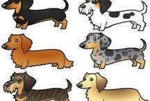 Dachshunds - I just can't get enough!  / by Marji Stewart