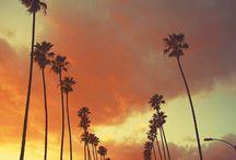 PALM TREES & Beach! / by Whitney Herrold