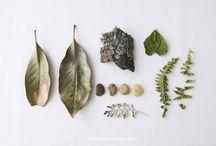 Nature / by Federica Altoé