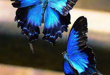 Floaty floaty butterfly's  / by Yvonne Simpson