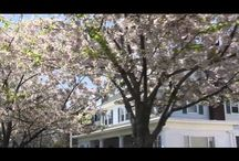 VIDEOS: Summer Update '13 / by Ward Wight Sotheby's International Realty