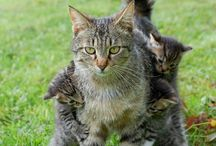 Fur kids / Sharing a love for cats, dogs and other furry animals / by Clare Appleyard
