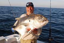 All About Species / Everything you need to know about fish species / by World Fishing Network