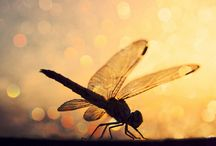 dragonflys / by Betty Cooper