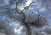 Trees / by Hiromi Matsuda