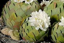 FLOWER DECORATIONS / by Christine Mareda