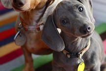Favorite Pets / by Lori Bouck Ciraulo