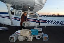 Planes Matt  has flown! / by Patty DeBolt