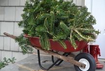 Holiday fun! / by Julie Beiler Lee