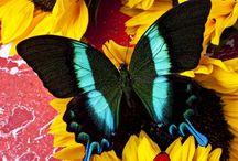 Fly Away, Fly Away Butterfly / by Wanda SemiRetired Gibson