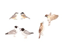 tiere - animals / by eva baldrian