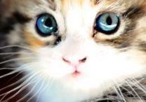 Kitties / by Rachel-Kate McGee