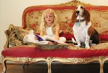 decor and dogs / by Taylor Greenwalt Interiors