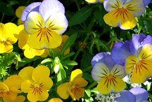 bloemen / by anja lens
