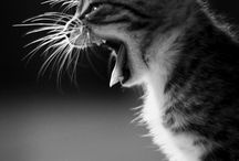 Here Kitty Kitty / by Jeff Davidson