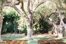 Weddings / by Sabrina Delgado