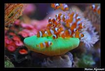 Coral Reefs / by Karen Klingenberg