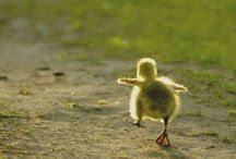 Animals / by Dawn Archer