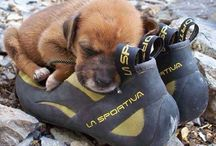 Canine Corner / The only friend I like no matter how many shoes they destroy.  / by Moosejaw