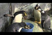 Fun Videos / by Tennessee Aquarium