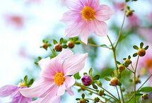 Flower/Natural / by Mary Frydenberg