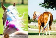 Horses. / by Kody Berry