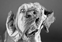 Animal photography and funnies / by Jenny Gray