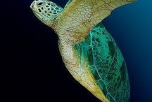 turtles / by mary l hager