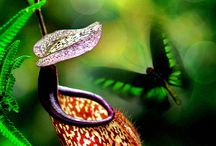 Carnivorous plants / by Kate Wall