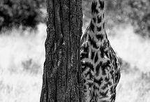 I love animals... / by Denece Redwine