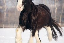 Horses / We love horses!  Here we're pinning some of our favorites. / by Horizon Structures